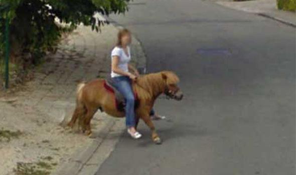 Google Maps Shetland pony