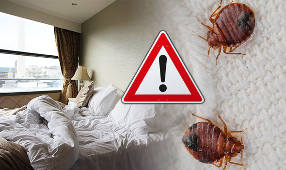 Bed bugs hotel signs